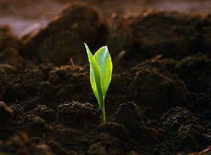 Уникальные возможности современных биоорганических удобрений