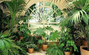 Интернет-магазин «Гилея» - разнообразие товаров для выращивания комнатных растений