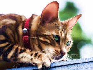 Выбираем противопаразитарное средство для кошек