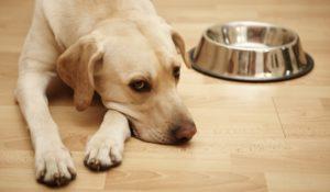 Как правильно выбрать миску для собак