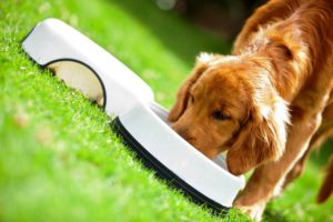 Как эффективно повысить иммунитет собаки за счет грамотного рациона питания?