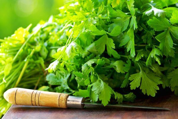Как сохранить зелень и травы на зиму